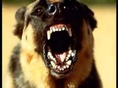 """""""Неужели это нормально?"""", - в Николаеве бродячая собака вцепилась в лицо 4-летнему мальчику"""
