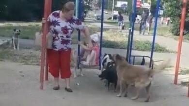 В Николаеве «собачья свадьба» вынудила женщину забрать ребенка с детской площадки | Корабелов.ИНФО