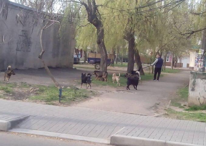 бродячие собаки в Корабельном районе