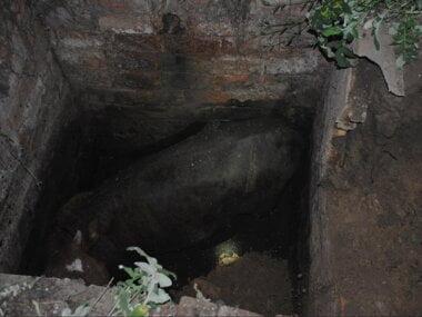 Корова упала в выгребную яму – животное доставали спасатели Корабельного района