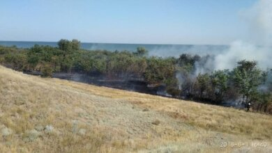 Одновременно на разных участках: в Балабановском лесу горела хвойная подстилка общей площадью 700 кв.м   Корабелов.ИНФО image 4