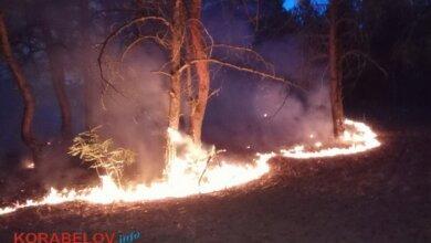 Огонь не прощает ошибок: в Балабановском лесу - очередной пожар (ВИДЕО) | Корабелов.ИНФО