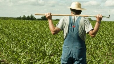 В Галициново фермер 5 лет незаконно пользовался 20 гектарами земли, принадлежащими покойнику | Корабелов.ИНФО