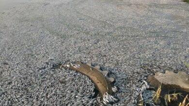 «Кошмар просто!», - рыбаки показали последствия массового мора рыбы в селе Лиманы (ВИДЕО) | Корабелов.ИНФО
