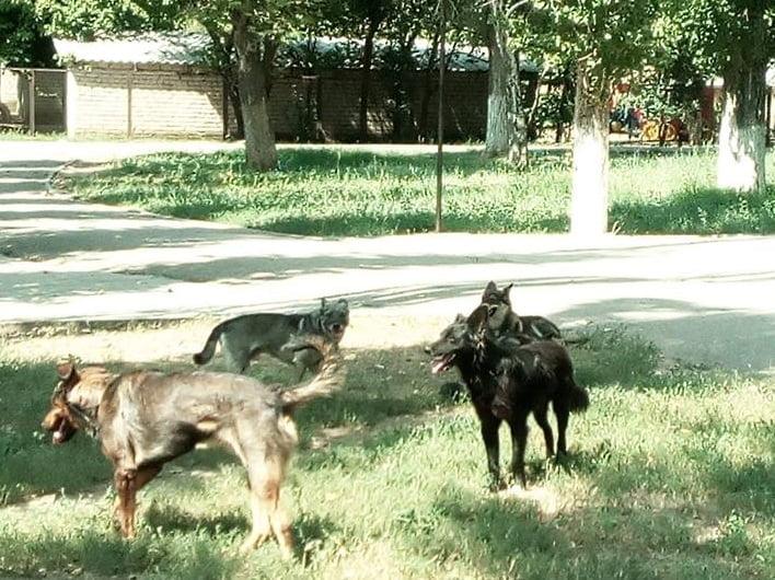 бродячие собаки возле д/сада по ул. Океановской