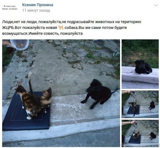"""""""Имейте совесть, пожалуйста"""". На территорию больницы в Корабельном районе подкинули собаку"""