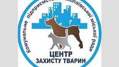 Госисполнители заблокировали работу николаевского КП «Центр защиты животных», арестовав его счет   Корабелов.ИНФО image 3