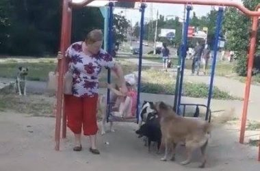 собаки у качелей