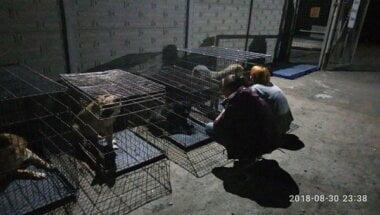 «Произошло знаменательное событие»: всех собак с николаевского «Центра защиты животных» забрали волонтеры