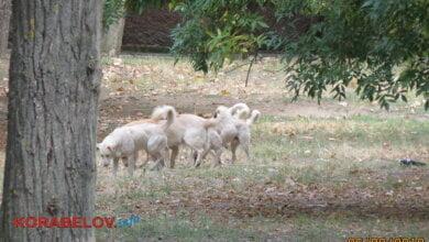 Photo of «Коррупционные риски и наглость», — о программе депутатов горсовета по бездомным животным в Николаеве (ВИДЕО)