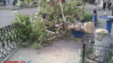 спилили здоровое дерево на пр. Корабелов
