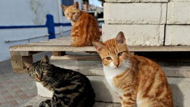 Признать уличных котов «полноправными жителями города» просят николаевцы | Корабелов.ИНФО