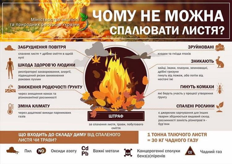 почему нельзя сжигать листья