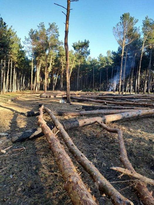 Photo of В Витовском районе спилили около 300 сосен — возможно, ради постройки коттеджей