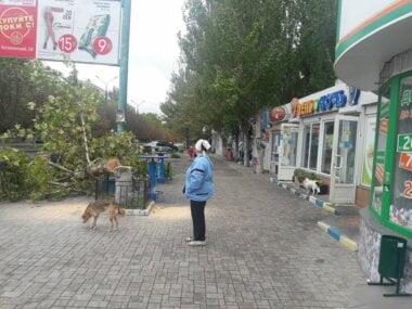 """""""С*ка, за**ала эта помойка, сил нет"""", - на людей в Корабельном районе опять нападают стаи собак"""