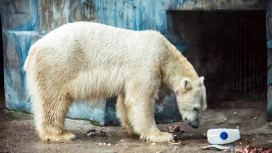 С подарками и детским вниманием николаевский белый медведь Нанук отпраздновал свое шестилетие | Корабелов.ИНФО image 1