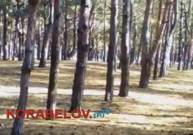 белка в лесопосадке по ул. Новостройной