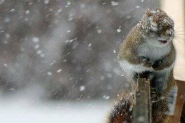 Дождь, мокрый снег и гололед: погода в Николаеве сегодня