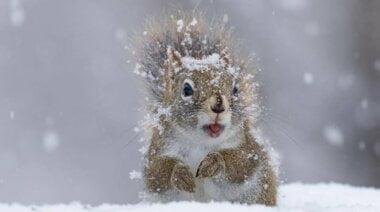 Завтра в Николаеве синоптики обещают до +2˚ и небольшой мокрый снег