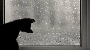 Завтра в Николаеве синоптики обещают +5˚ и дождь