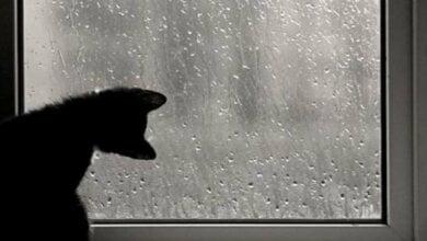 Завтра в Николаеве синоптики обещают +5˚ и дождь   Корабелов.ИНФО