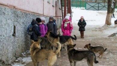 Photo of В Николаеве собака напала на 10-летнего ребенка — директор КП обвинил депутатов