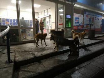 """собаки у входа в """"АТБ"""" в Корабельном районе"""