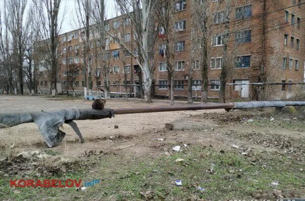 Николаев - город для собак? На оголенной теплотрассе в Корабельном районе греются бездомные животные. За счет жителей | Корабелов.ИНФО image 3