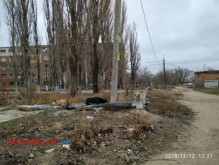 Николаев - город для собак? На оголенной теплотрассе в Корабельном районе греются бездомные животные. За счет жителей