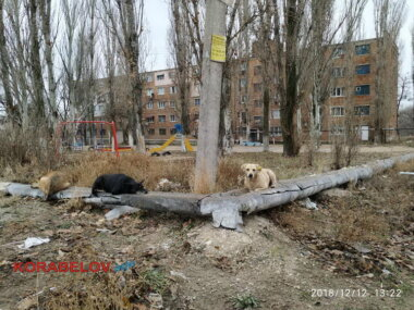 бродячие собаки греются на теплотрассе