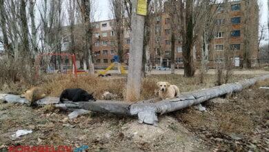 Photo of «Платим за обогрев улиц»: в Николаеве теплотрассы проверили на тепловизоре (видео)
