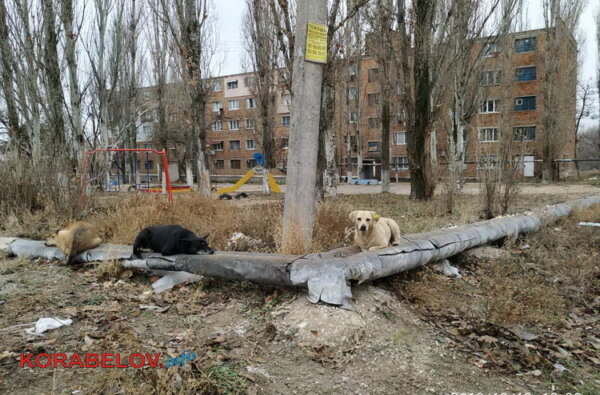 Николаев - город для собак? На оголенной теплотрассе в Корабельном районе греются бездомные животные. За счет жителей | Корабелов.ИНФО image 1