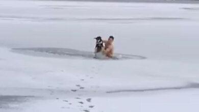 В Николаеве морпех нырнул в прорубь, чтобы спасти тонущего пса (Видео) | Корабелов.ИНФО