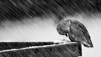 На Николаевщине ожидается резкое ухудшение погоды | Корабелов.ИНФО