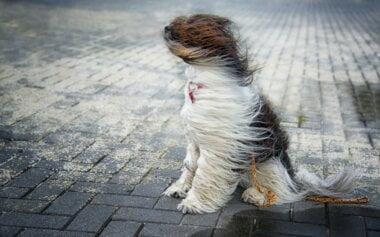 Завтра в Николаеве синоптики обещают пасмурную и ветреную погоду