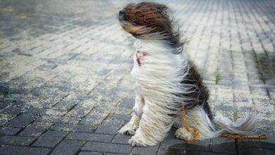 Photo of Завтра в Николаеве синоптики обещают пасмурную и ветреную погоду