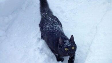 Мороз до -10º и гололед: прогноз погоды в Николаеве на вторник   Корабелов.ИНФО