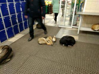 """собаки в """"АТБ"""" по пр. Богоявленскому, 342/5"""
