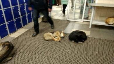 Photo of «Чтобы вы сдохли все», — «зоозащитницы» в Николаеве призывают вместо собак травить людей