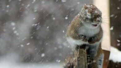 В Николаеве обещают существенное ухудшение погоды в ближайшие дни | Корабелов.ИНФО