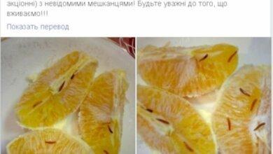 Жительница Николаева купила по акции апельсины с личинками. ФОТО | Корабелов.ИНФО