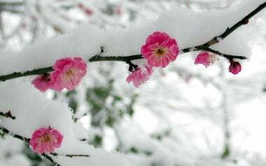 В Украину идет атмосферный фронт с морозами и проливными дождями