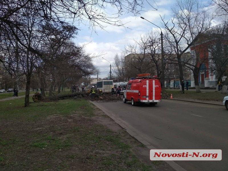 """В Николаеве на """"маршрутку"""" упало дерево, пострадали дети (видео)"""
