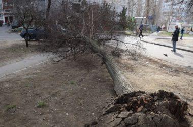 В Николаеве в пяти метрах от детской площадки на машину рухнуло дерево
