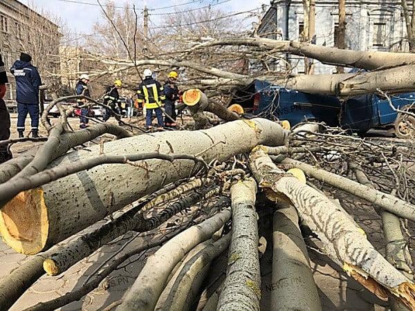 Упавший тополь в Николаеве раздавил «Газель» – водитель намерен судиться с городом