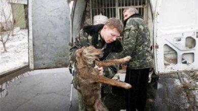 В части Николаева, где бешеная собака нападала на людей, отловят всех животных | Корабелов.ИНФО