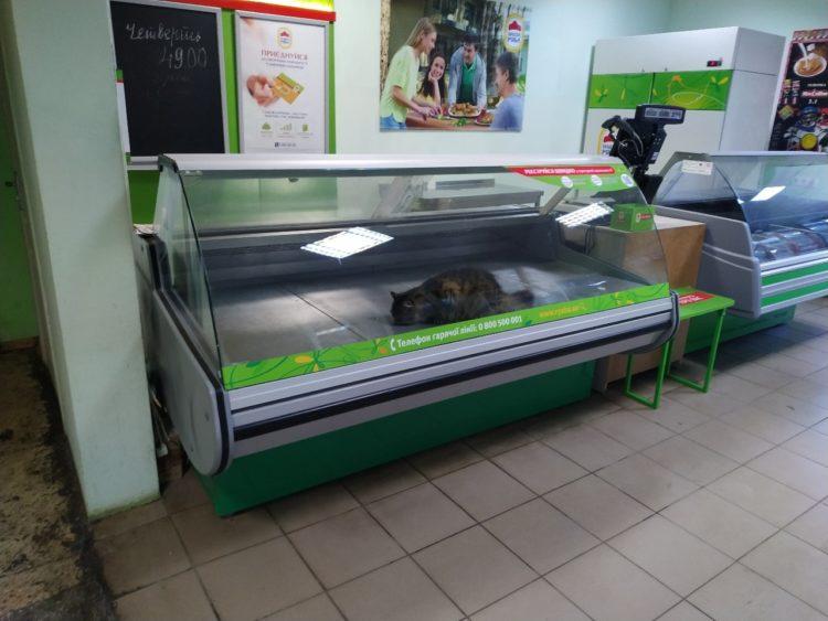 """Photo of """"Наша Ряба"""" не продает мясо котов"""", – администрация магазина отреагировала на жалобу жительницы Корабельного района"""
