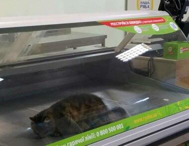 живой кот в витрине продовольственного магазина