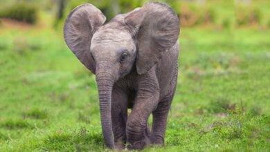 В Николаевском зоопарке скоро появятся два молодых самца азиатского слона | Корабелов.ИНФО
