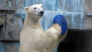 Игрушки для животных: Николаевский зоопарк просит горожан помочь разнообразить быт зверей   Корабелов.ИНФО